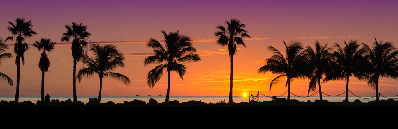 Palm trees along coastline at sunset